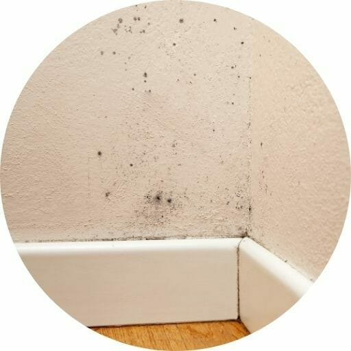 Condensation and Mould Matheson Damp Se